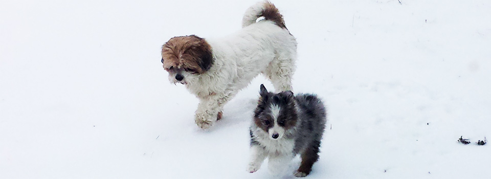 2-dogs-in-snow