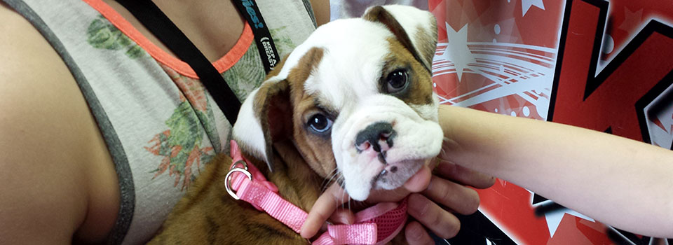 dog-with-pink-collar