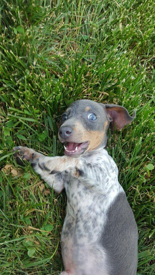 baby 2 dog