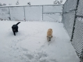 snow  dog pic